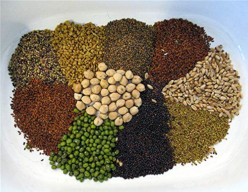Bio kiepenkerl in confezione regalo, 10varietà–Perfetto per la cucina o praesent
